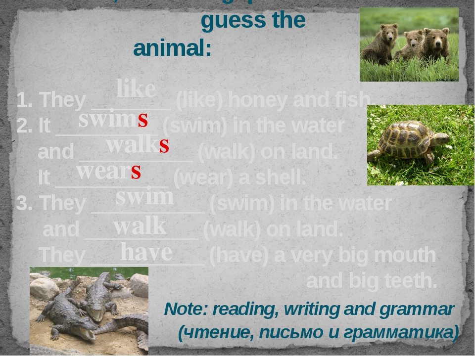 Let's read, fill in the gaps and guess the animal: 1. They _______ (like) hon...