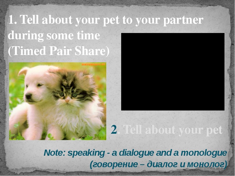 1. Tell about your pet to your partner during some time (Timed Pair Share) No...