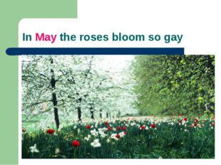 In May the roses bloom so gay