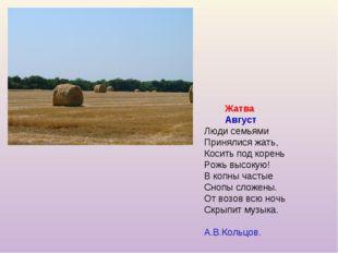 Жатва Август Люди семьями Принялися жать, Косить под корень Рожь высокую! В