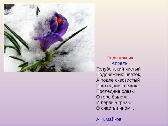 Подснежник Апрель Голубенький чистый Подснежник: цветок, А подле сквозистый...