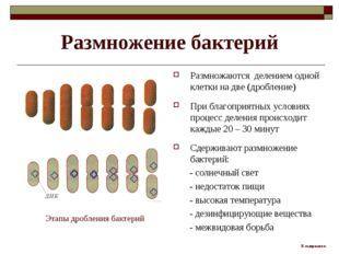 Размножение бактерий Размножаются делением одной клетки на две (дробление) Пр