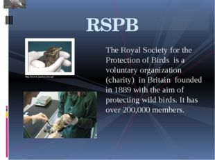 The Royal Society for the Protection of Birds is a voluntary organization (ch