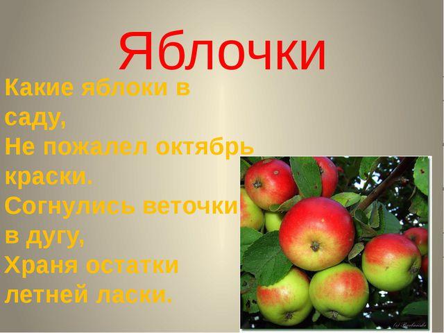 Яблочки Какие яблоки в саду, Не пожалел октябрь краски. Согнулись веточки в д...