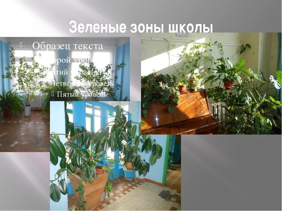 Зеленые зоны школы