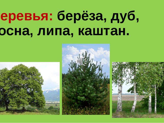 Деревья: берёза, дуб, сосна, липа, каштан.