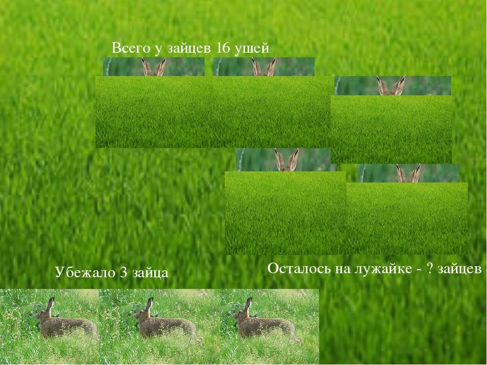 Всего у зайцев 16 ушей Убежало 3 зайца Осталось на лужайке - ? зайцев
