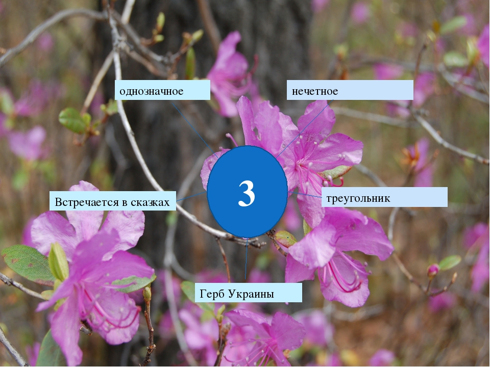 3 однозначное нечетное Встречается в сказках треугольник Герб Украины