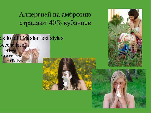 Аллергией на амброзию страдают 40% кубанцев