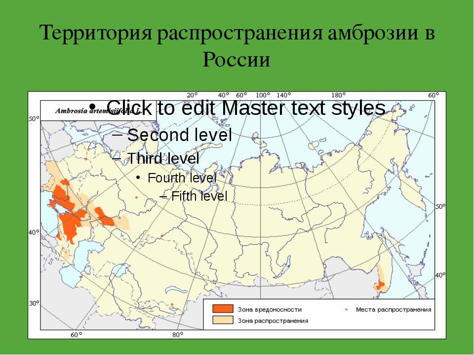 Территория распространения амброзии в России