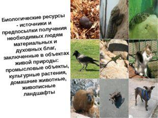 Биологические ресурсы - источники и предпосылки получения необходимых людям м