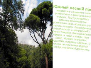 Южный лесной пояс находится в основном в зоне тропического и экваториального