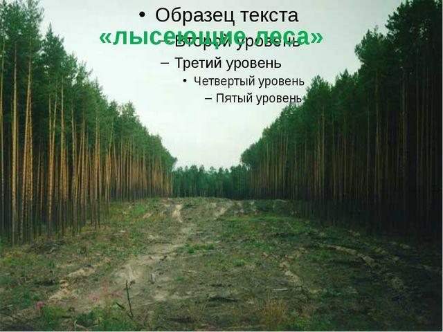 «лысеющие леса»