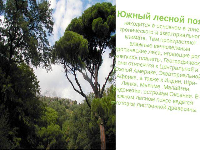 Южный лесной пояс находится в основном в зоне тропического и экваториального...