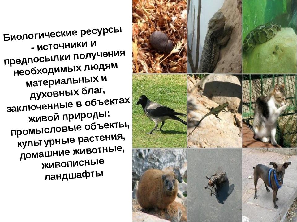 Биологические ресурсы - источники и предпосылки получения необходимых людям м...