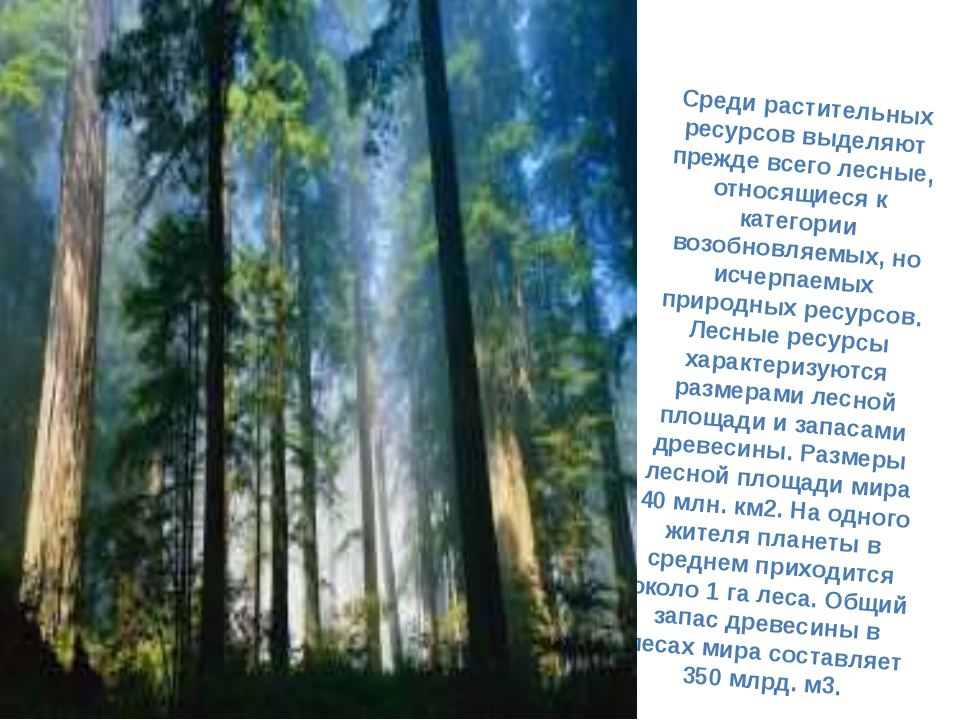 Среди растительных ресурсов выделяют прежде всего лесные, относящиеся к катег...