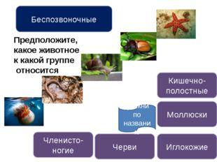 Кишечнополостные животные Назови кишечнополостных Строение кишечнополостных