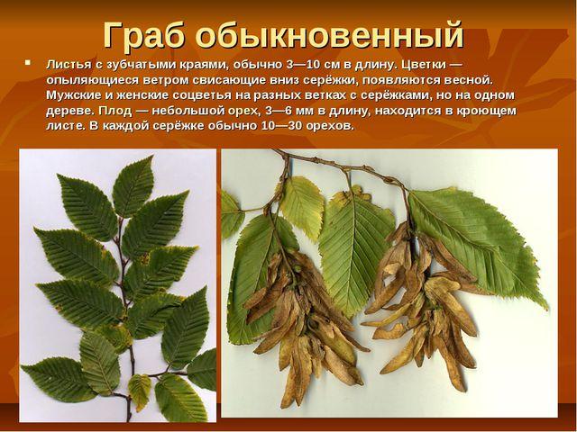 Граб обыкновенный Листья с зубчатыми краями, обычно 3—10 см в длину. Цветки —...