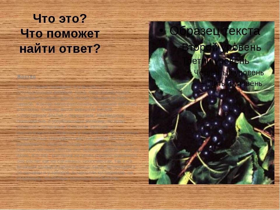 Что это? Что поможет найти ответ? Жостер Это кустарник примерно 3-м высоты, с...