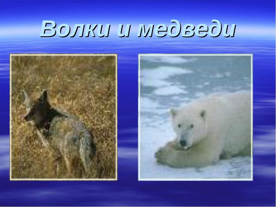 Волки и медведи