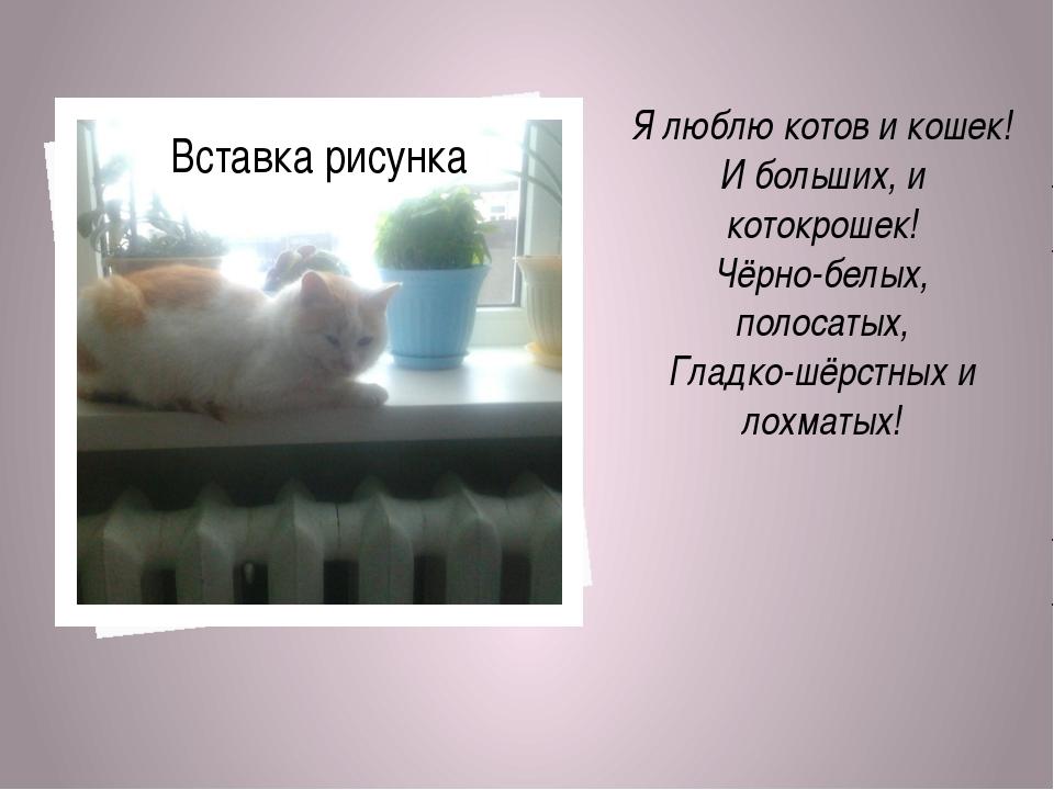 Я люблю котов и кошек! И больших, и котокрошек! Чёрно-белых, полосатых, Глад...