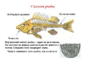 Внутренний скелет рыбы – один на всю жизнь. Он состоит из живых клеток и раст