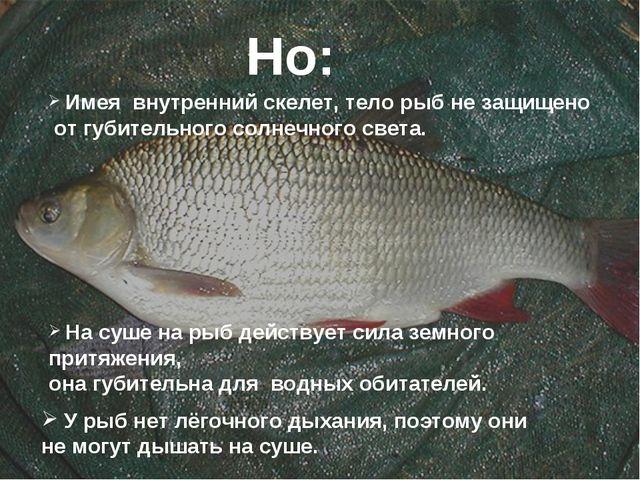 Но: Имея внутренний скелет, тело рыб не защищено от губительного солнечного с...