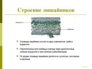 Строение лишайников Слоевище лишайника состоит из двух компонентов: гриба и в