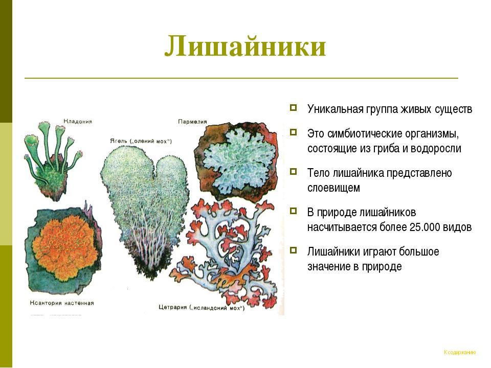Лишайники Уникальная группа живых существ Это симбиотические организмы, состо...