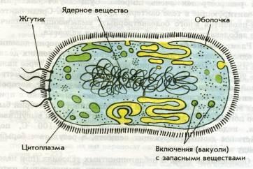 http://printwater.ru/templ/image/aHR0cDovLzkwMGlnci5uZXQvZGF0YWkvYmlvbG9naWphL1N0cm9lbmllLWtsZXRraS1pLWVqby1mdW5rdHNpaS8wMDA2LTAxMS1UaXB5LWtsZXRvay5qcGc=