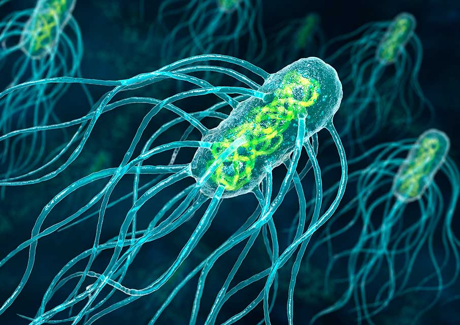 salmonella bacteria and regular diet