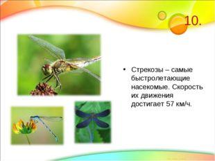 10. Стрекозы – самые быстролетающие насекомые. Скорость их движения достигает