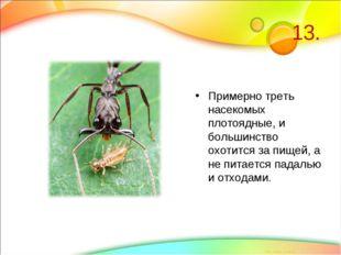 13. Примерно треть насекомых плотоядные, и большинство охотится за пищей, а н