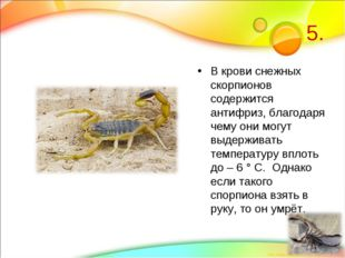 5. В крови снежных скорпионов содержится антифриз, благодаря чему они могут в