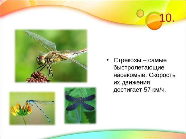 10. Стрекозы – самые быстролетающие насекомые. Скорость их движения достигает...