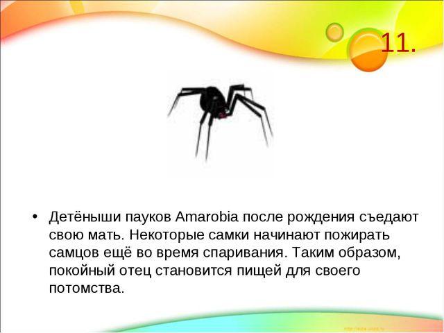11. Детёныши пауков Amarobia после рождения съедают свою мать. Некоторые самк...