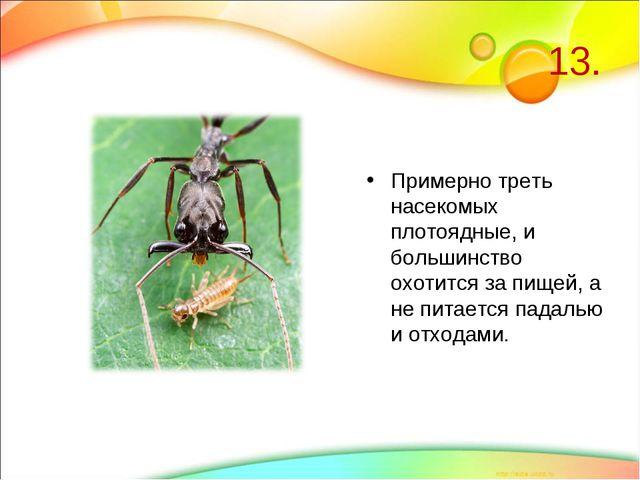 13. Примерно треть насекомых плотоядные, и большинство охотится за пищей, а н...