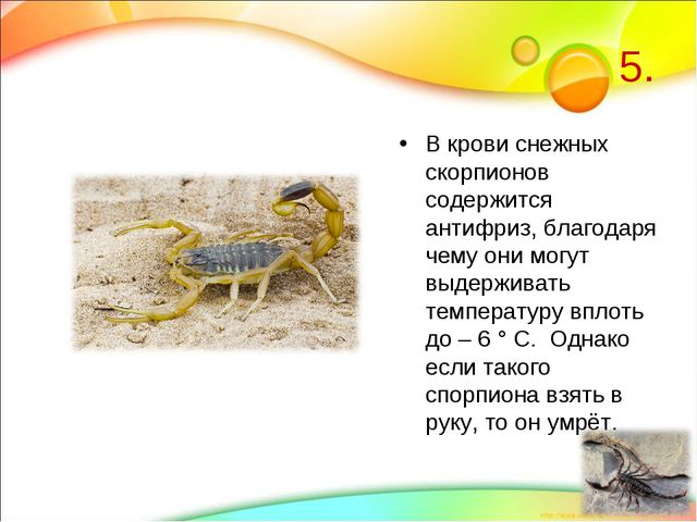 5. В крови снежных скорпионов содержится антифриз, благодаря чему они могут в...