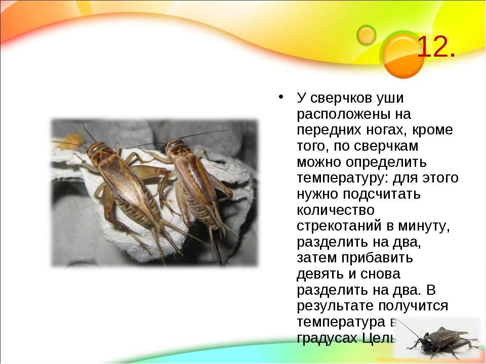 12. У сверчков уши расположены на передних ногах, кроме того, по сверчкам мож...