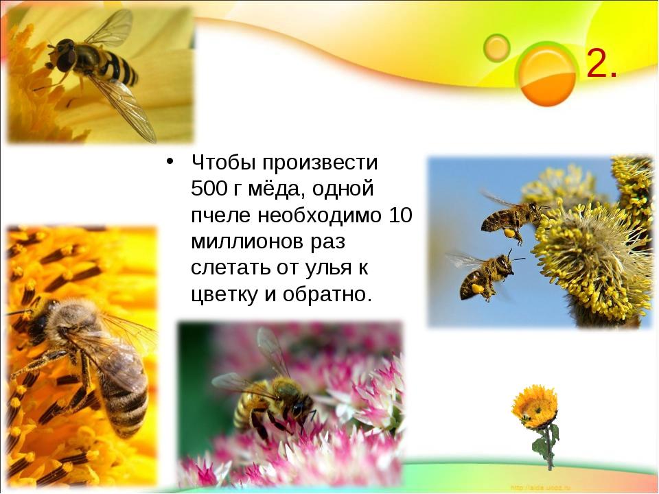 2. Чтобы произвести 500 г мёда, одной пчеле необходимо 10 миллионов раз слета...