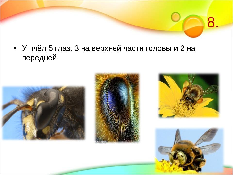 8. У пчёл 5 глаз: 3 на верхней части головы и 2 на передней.
