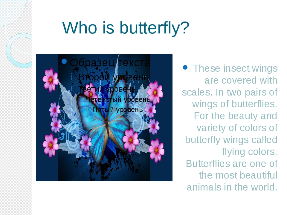 Who is butterfly? These insect wings are covered with scales. In two pairs o...