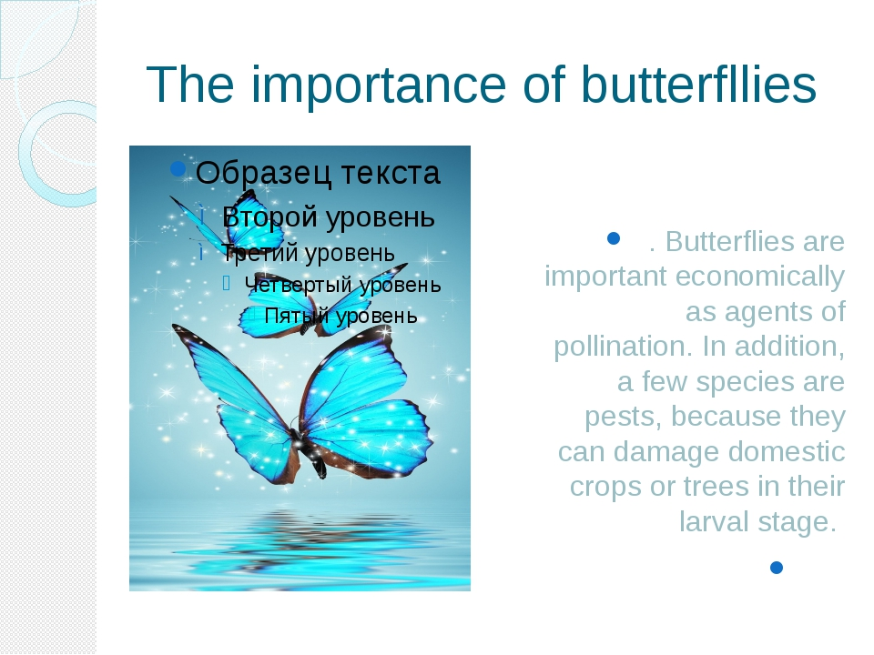 The importance of butterfllies . Butterflies are important economically as ag...