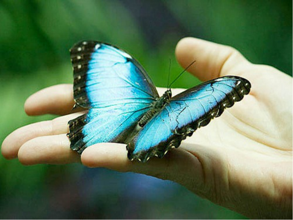 Метелики ніколи не сплять