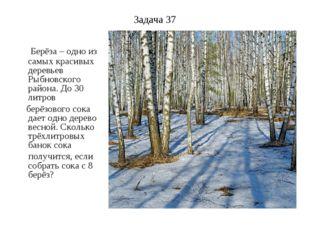 Задача 37 Берёза – одно из самых красивых деревьев Рыбновского района. До 30