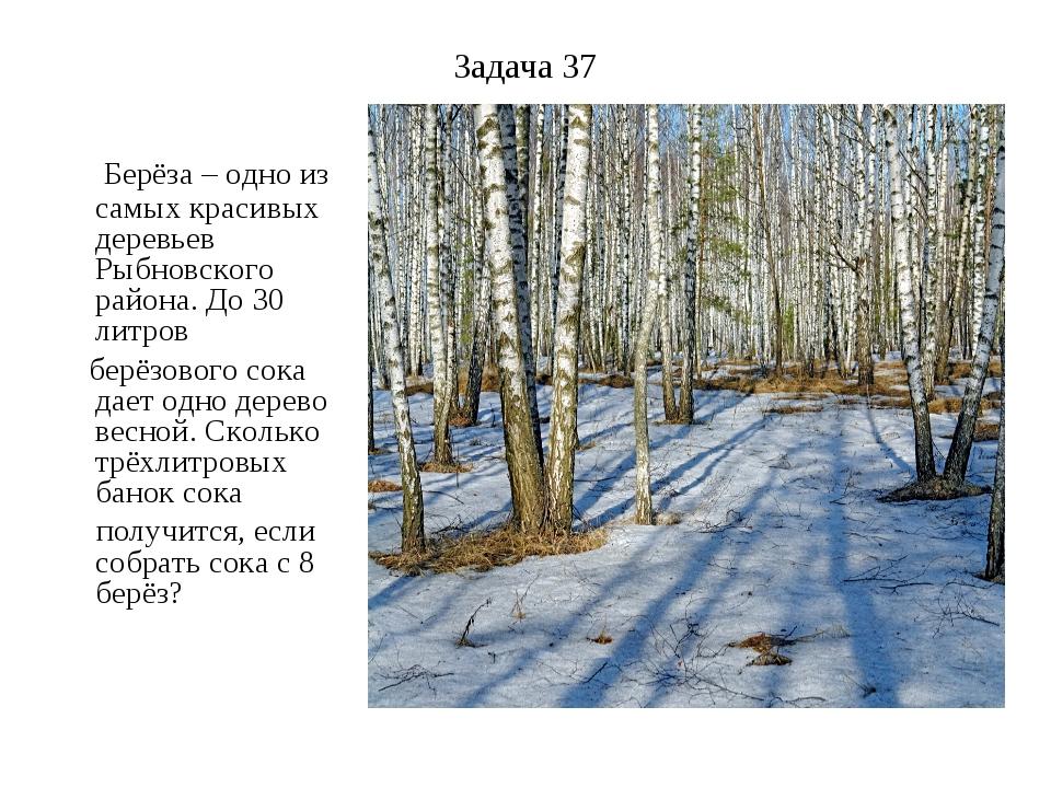 Задача 37 Берёза – одно из самых красивых деревьев Рыбновского района. До 30...