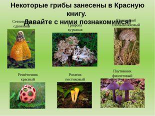 Некоторые грибы занесены в Красную книгу. Давайте с ними познакомимся! Сеткон