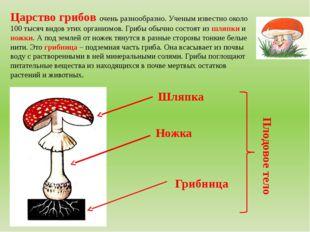 Царство грибов очень разнообразно. Ученым известно около 100 тысяч видов этих