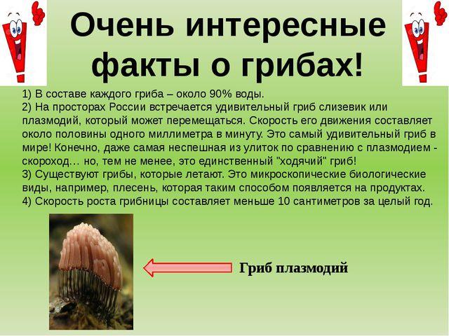 1) В составе каждого гриба – около 90% воды. 2) На просторах России встречает...