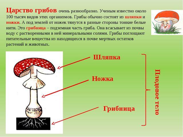Царство грибов очень разнообразно. Ученым известно около 100 тысяч видов этих...